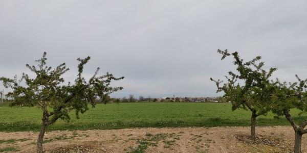 Bellpuig aposta per la dinamització i conservació de l'espai natural dels secans de Belianes-Preixana